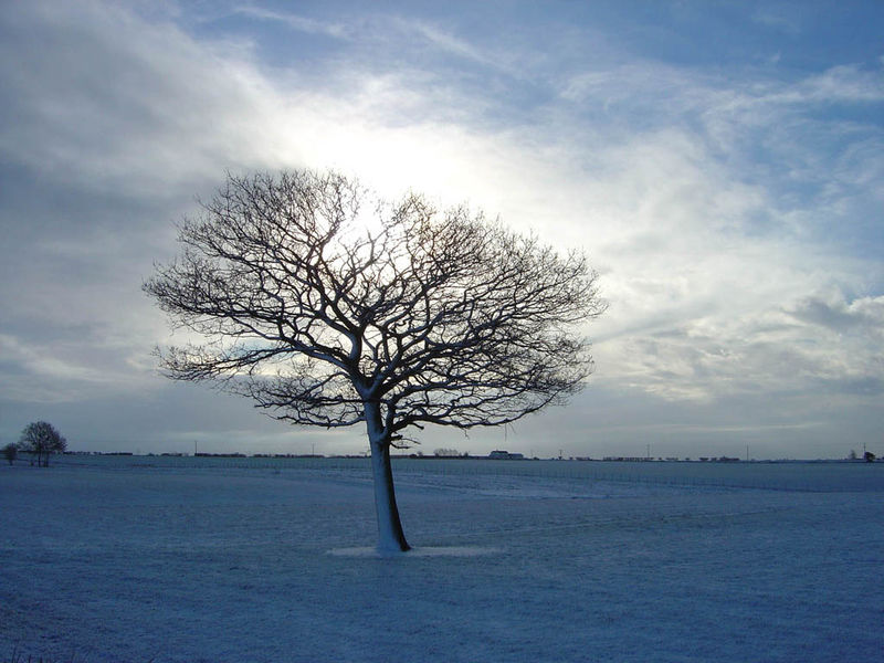 Beauty snow tree_1